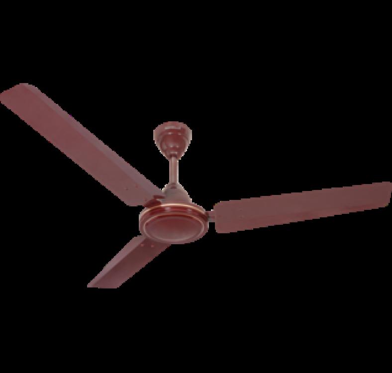 Regular  Brown Fan