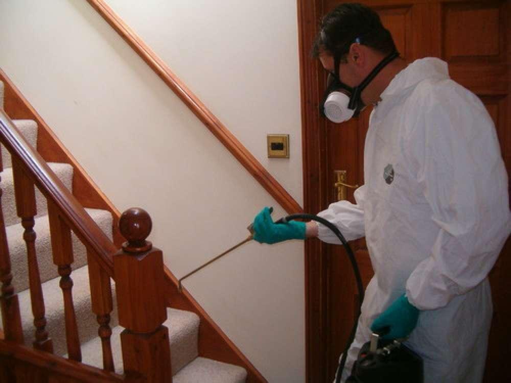 Non Toxic Pest Control Services