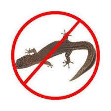 Lizards pest control services
