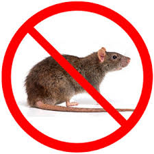 Rodent Pest Control Services