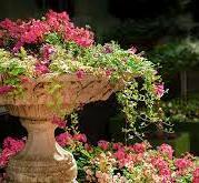 Flower Fountains